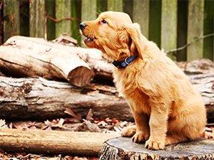 Bild: Mein Hund bellt ständig – Wie dem Hund bellen abgewöhnen?