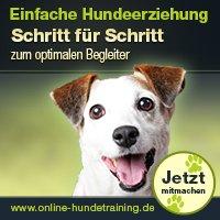 Bild: Online Hundetraining
